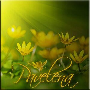 цветы, лепестки, лучи, боке