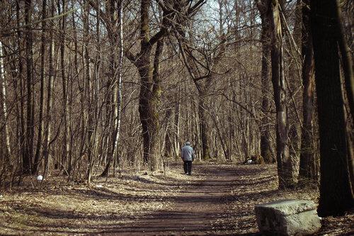 Вглубь пробуждающегося леса