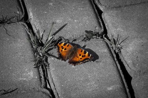 Орден первой бабочки