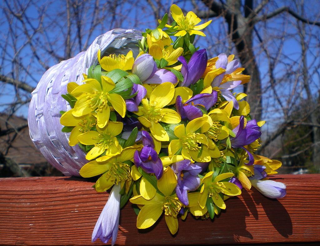 Обои стол, цветы, синие, серверовка. Цветы foto 15