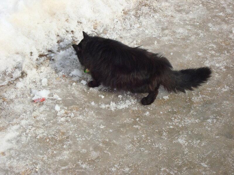 Дзержинский котэ игнорируе