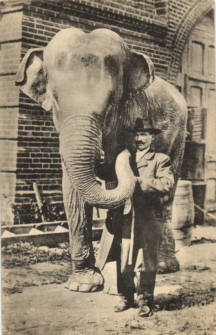 Московский зоологический сад. Слон