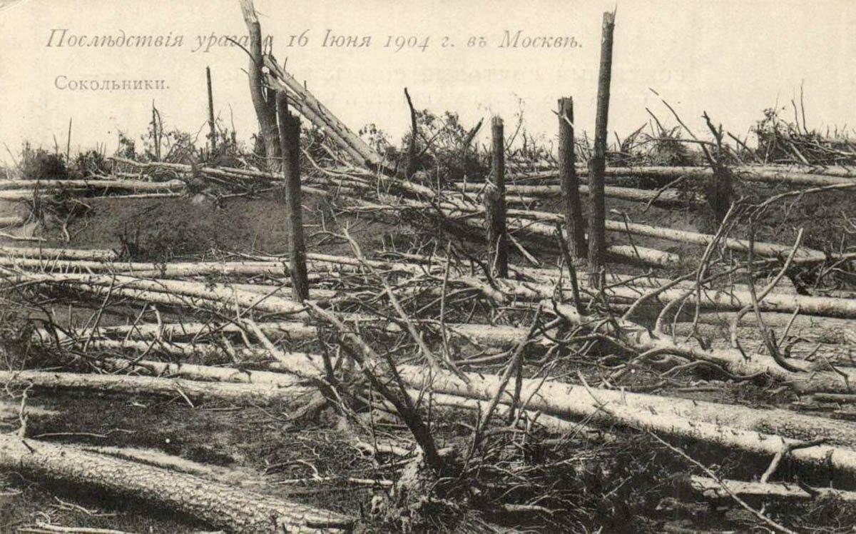 Последствия урагана 16 июня 1904 г.  Сокольники