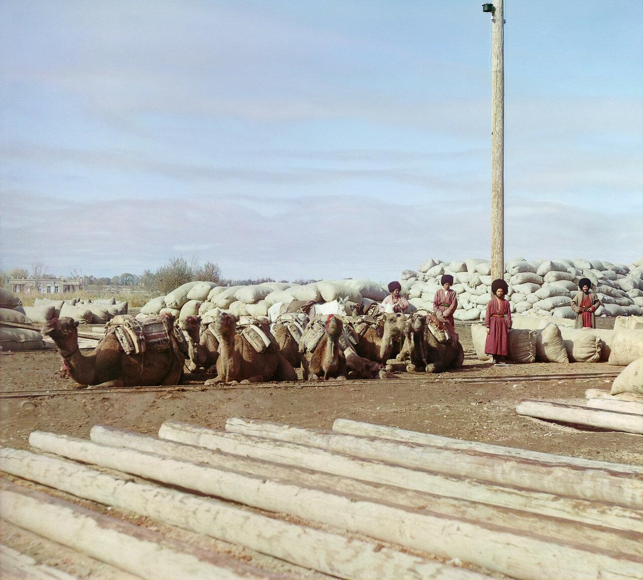 Окрестности Мерва. Байрам-Али. Мургабское имение. Доставка хлопка в завод