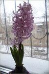 8 Марта в Омске: цветок, решётка и зима...