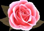 роза57.png