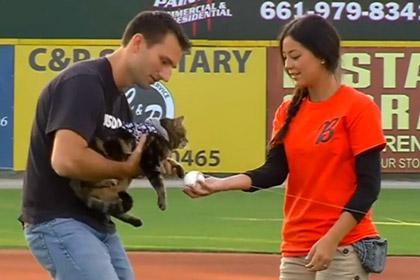 Кошка, спасшая ребенка от пса, была почетным гостем на матче по бейсболу