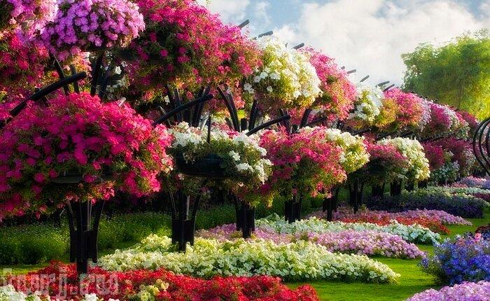 Парки цветы и сады всего мира фото