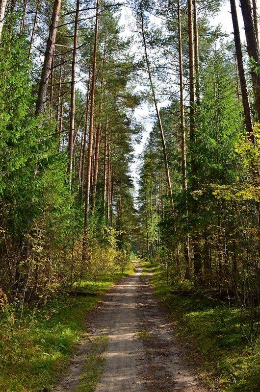 По лесной дорожке.jpg