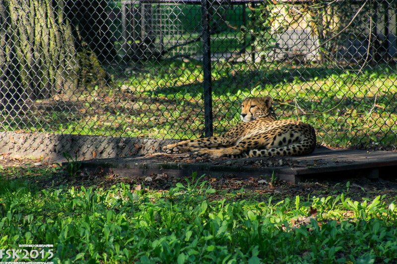 warshaw_zoo-13.jpg