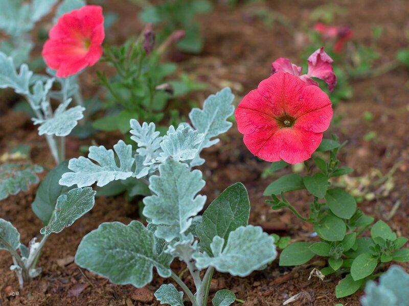 Ботанический сад на пр. Мира. Часть I