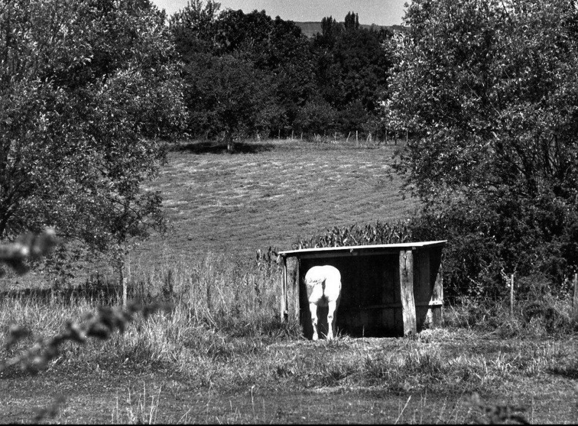 1972. Белый конь