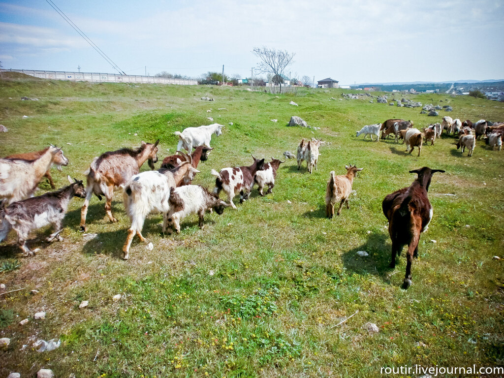 Профессия: пастух