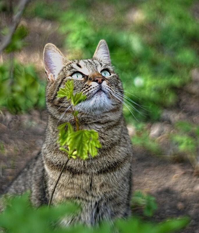 Кот в зеленом