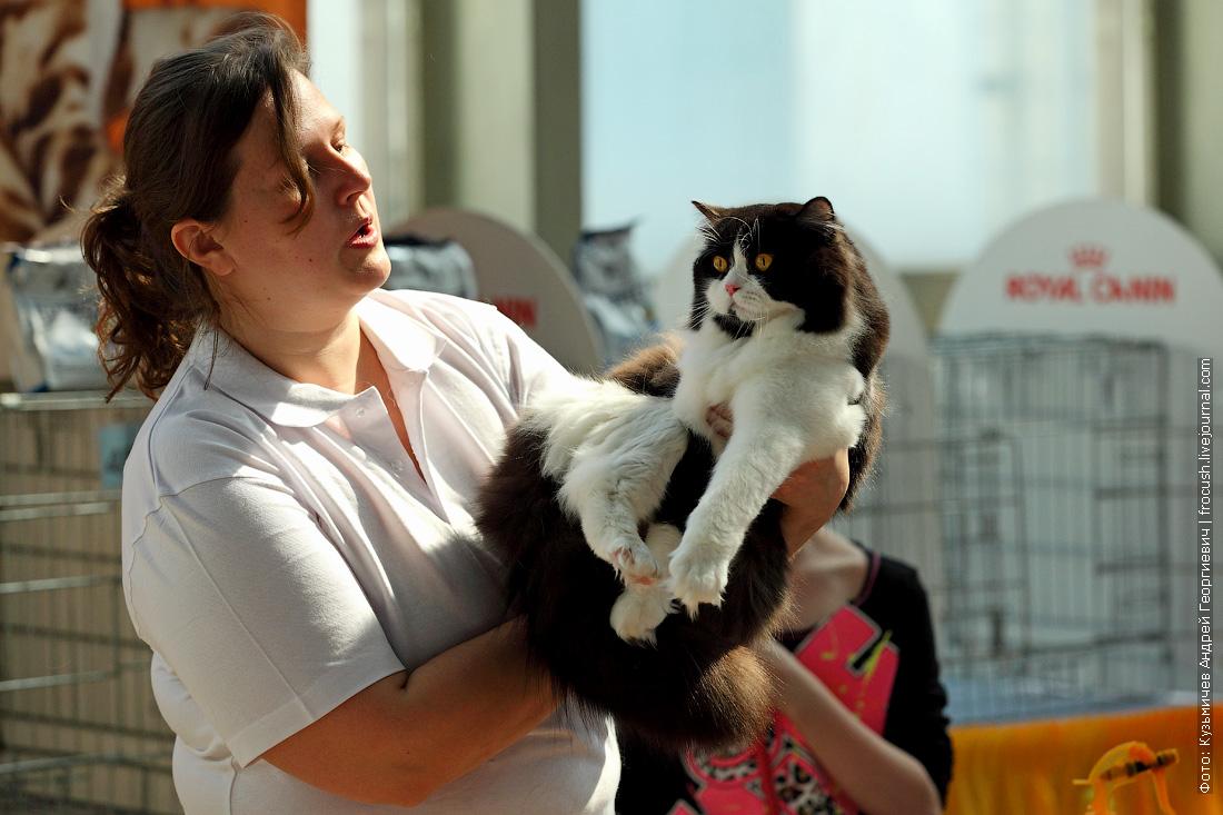 выставка кошек Содружество 2014