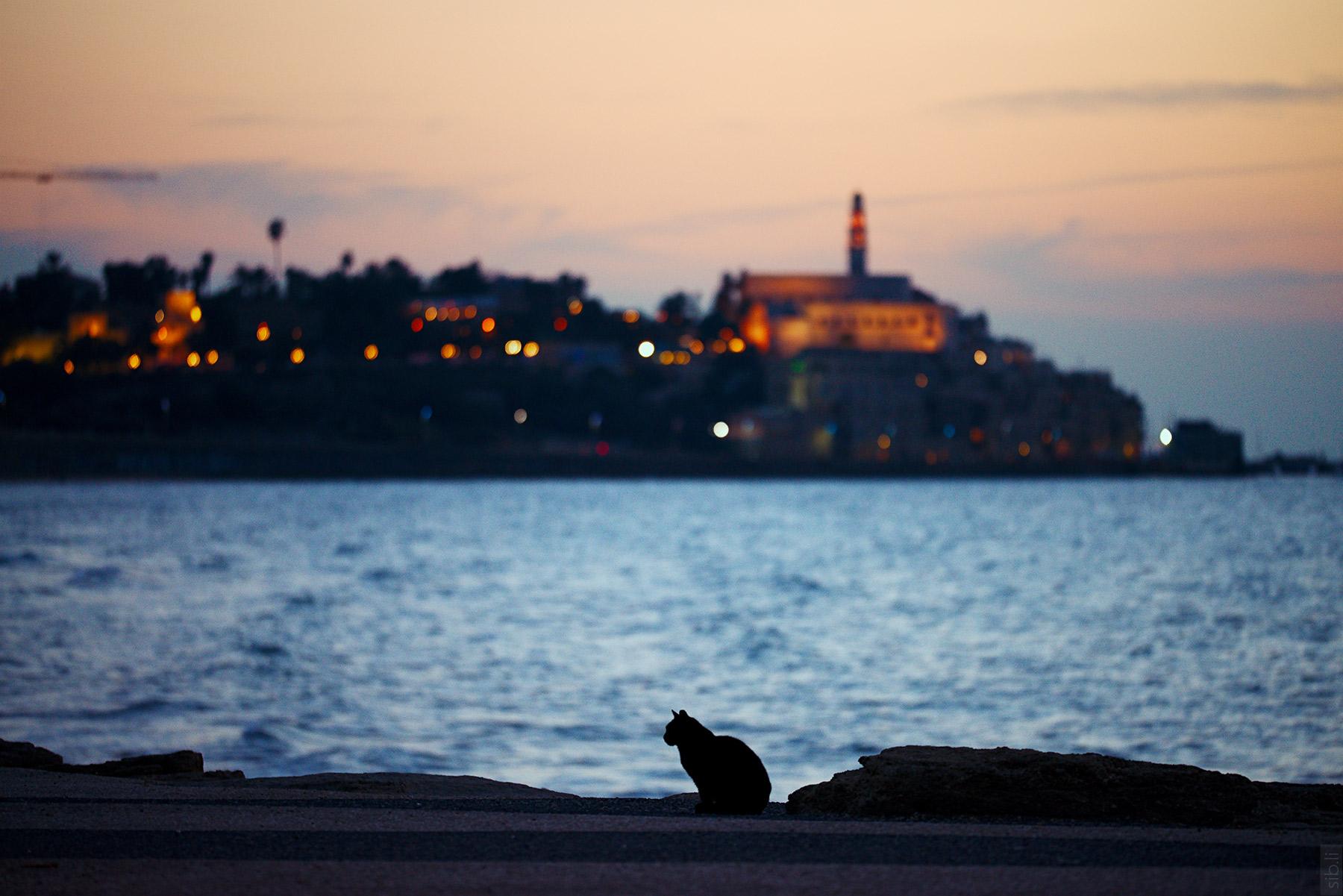 Stray cat of Tel Aviv