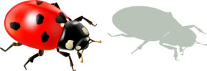 Божьи коровки