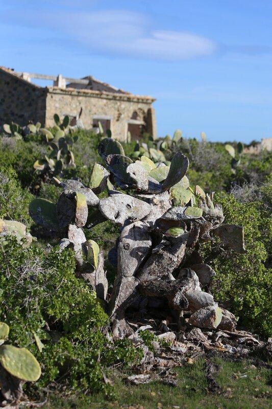 Остров Табарка. Кактусы