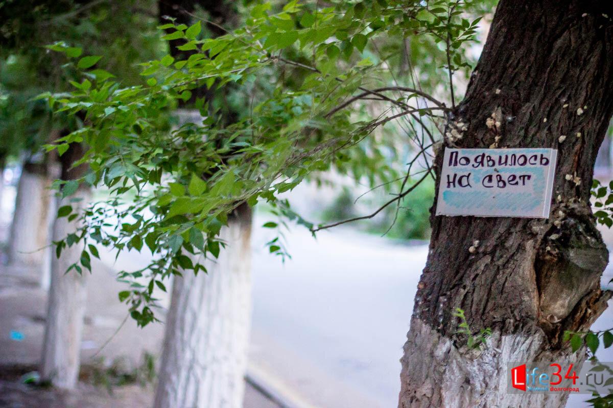 В Волгограде Романтофоб поздравил любимую с помощью деревьев Общество