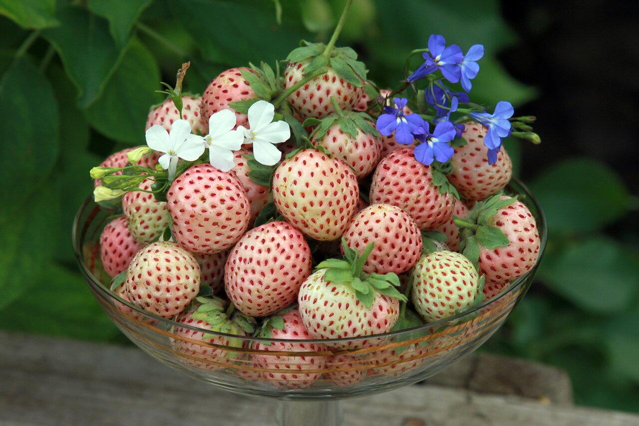 Пайнберри - земляника садовая  со вкусом ананаса