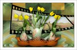 желтые тюльпаны.jpg