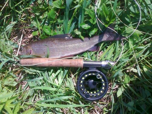 Был на днях на рыбалке... 0_119c51_f1244092_L