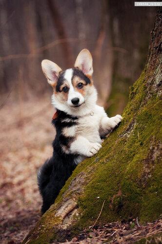 пофотографирую Ваших собак! 0_15cd50_8be33f31_L