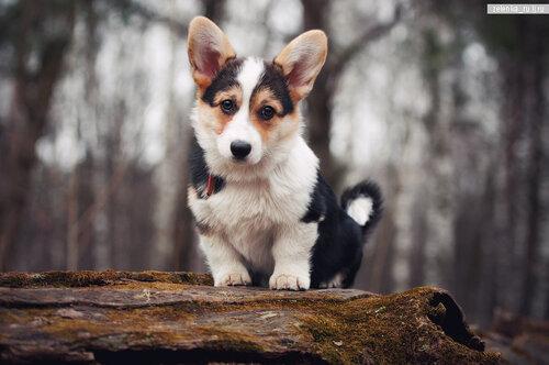 пофотографирую Ваших собак! 0_15cd52_4eed067d_L