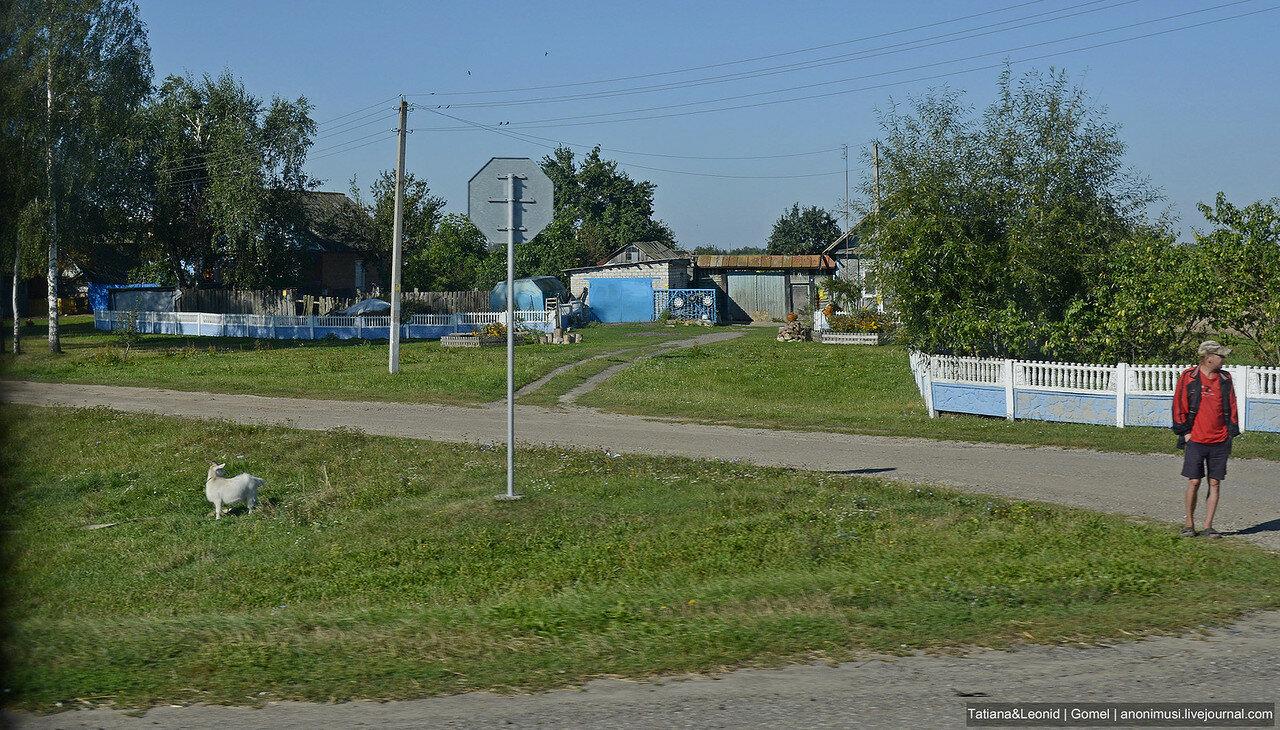 Дорога Гомель - Рогачев