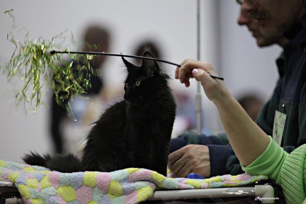 Выставка Кошек в Сокольниках
