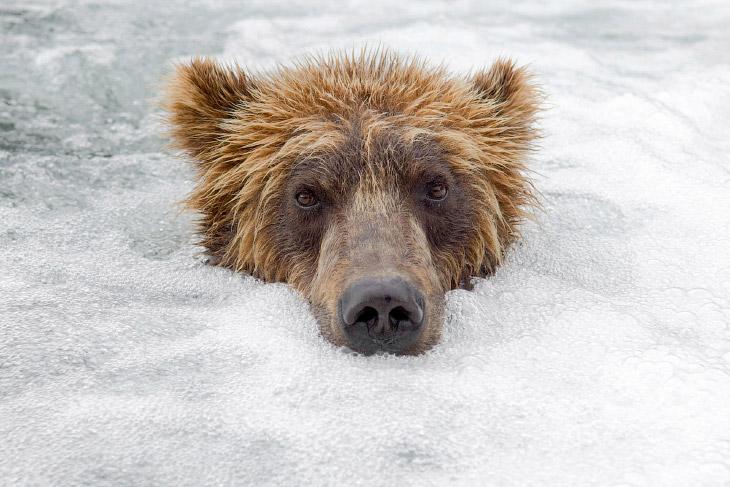 Фотографии Сергея Горшкова , источник sergeydolya   1.