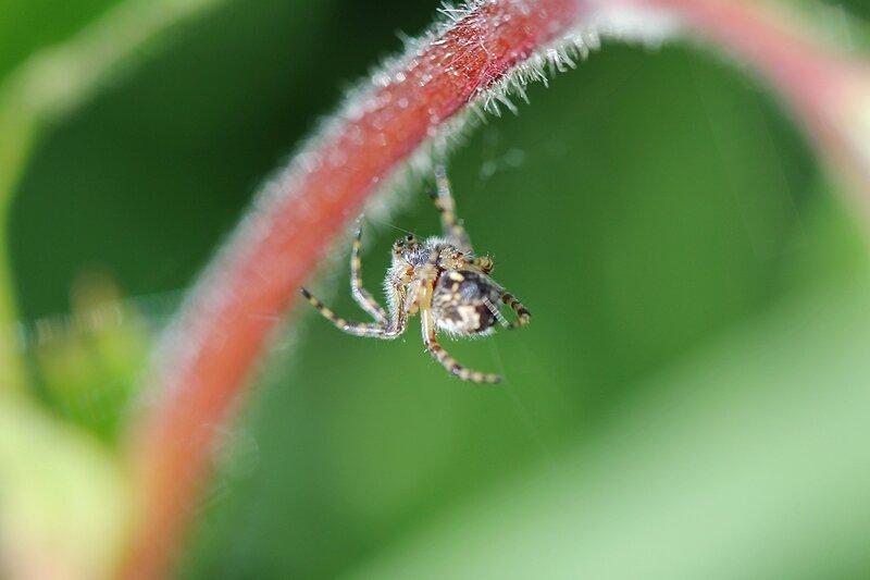 Паук, висящий на паутине под черешком листика