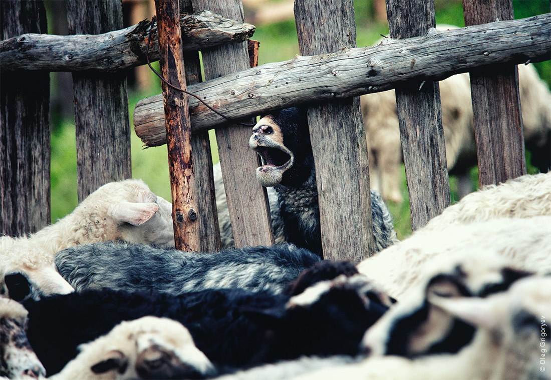 пастухи в Карпатах