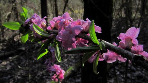 Альбом: лесные растения весна, природа, тепло, март Автор фото: Лариса Петрович