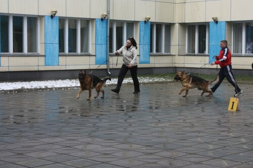 http://img-fotki.yandex.ru/get/9744/88244276.3/0_109550_7c2d1093_L.jpg