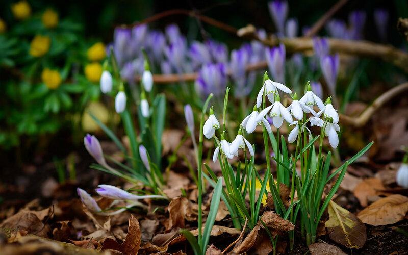 """Коллекция красивейших обоев на рабочий стол """"Весна пришла ... Весенние Рамки"""