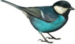 Holliewood_NatureJournal_Bird1.png