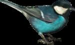 Holliewood_NatureJournal_Bird1.png