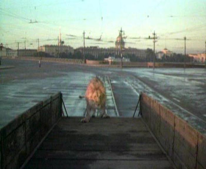 39. Лев догоняет трамвай, который уже переехал на другую сторону Невы через Троицкий мост, на другом