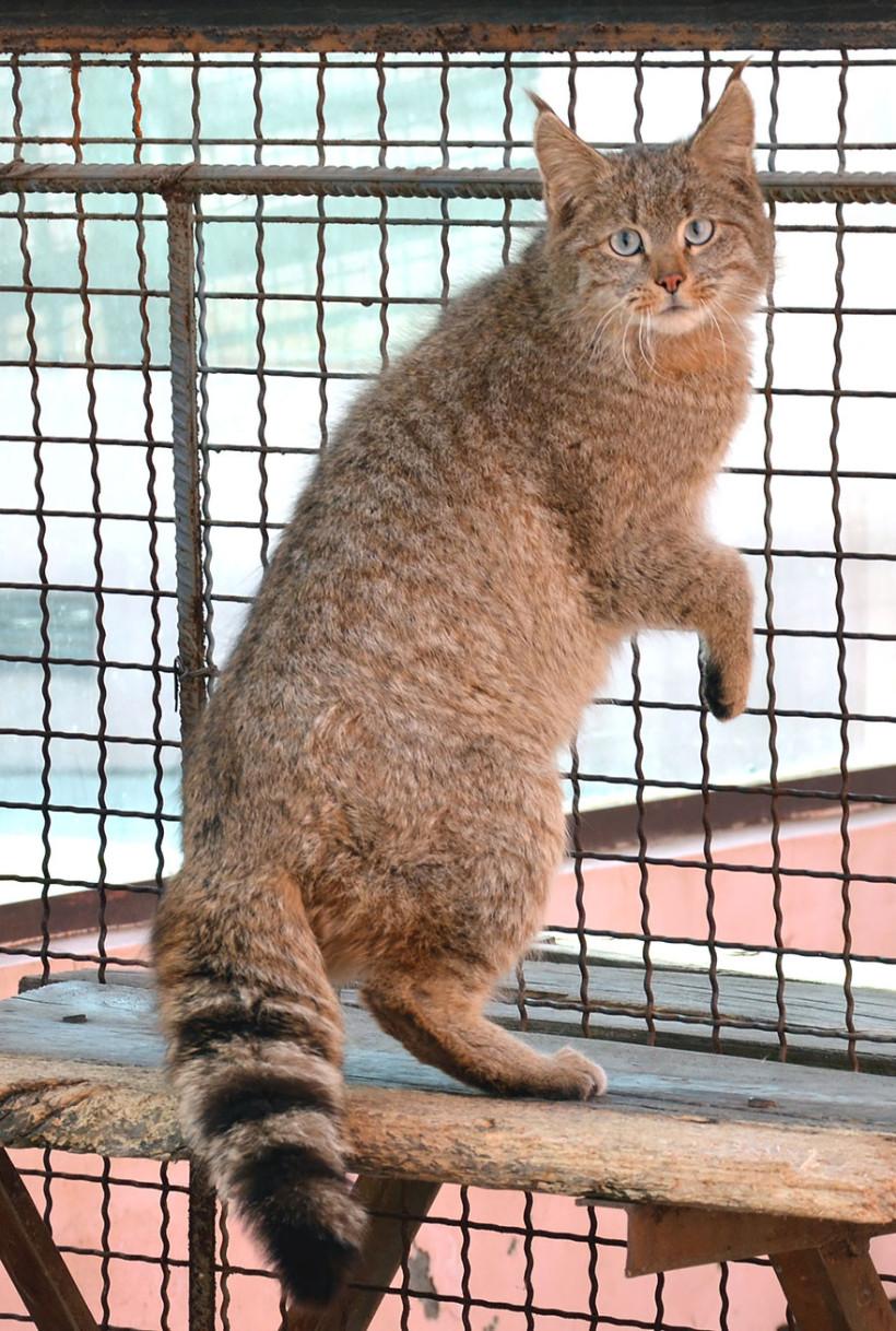 17 кошек, о существовании которых знают не все