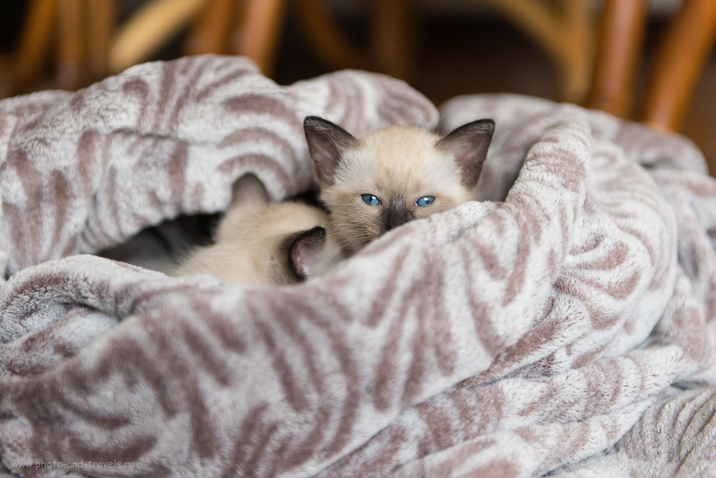 Фотография 16. Съемка котят дома. Близится сон-час... (1000, 70, 2.8, 1/250)