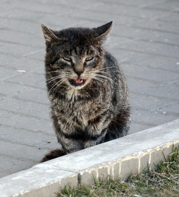 коломенская кошка 2.jpg