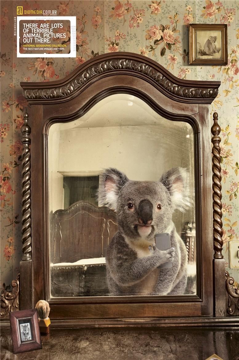 Рекламная кампания сервиса стоковых фотографий Diomedia - National Geographic Collection - Koala