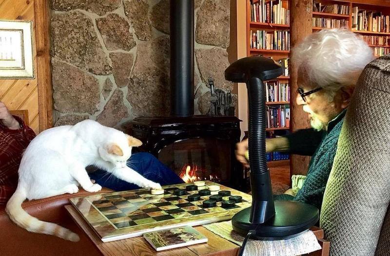 Смешные картинки шашки