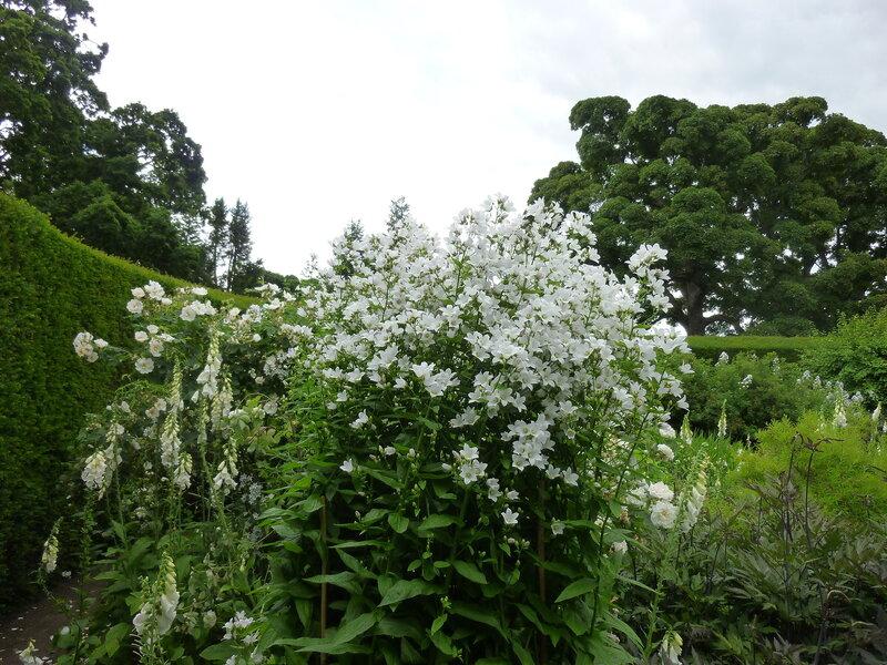 Сад в белых тонах