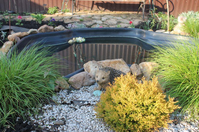 Возле забора оборудован небольшой пруд, возле которого живет еще один ёжик. (09.06.2015)