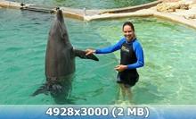 http://img-fotki.yandex.ru/get/9746/247322501.32/0_168d47_ad78b821_orig.jpg