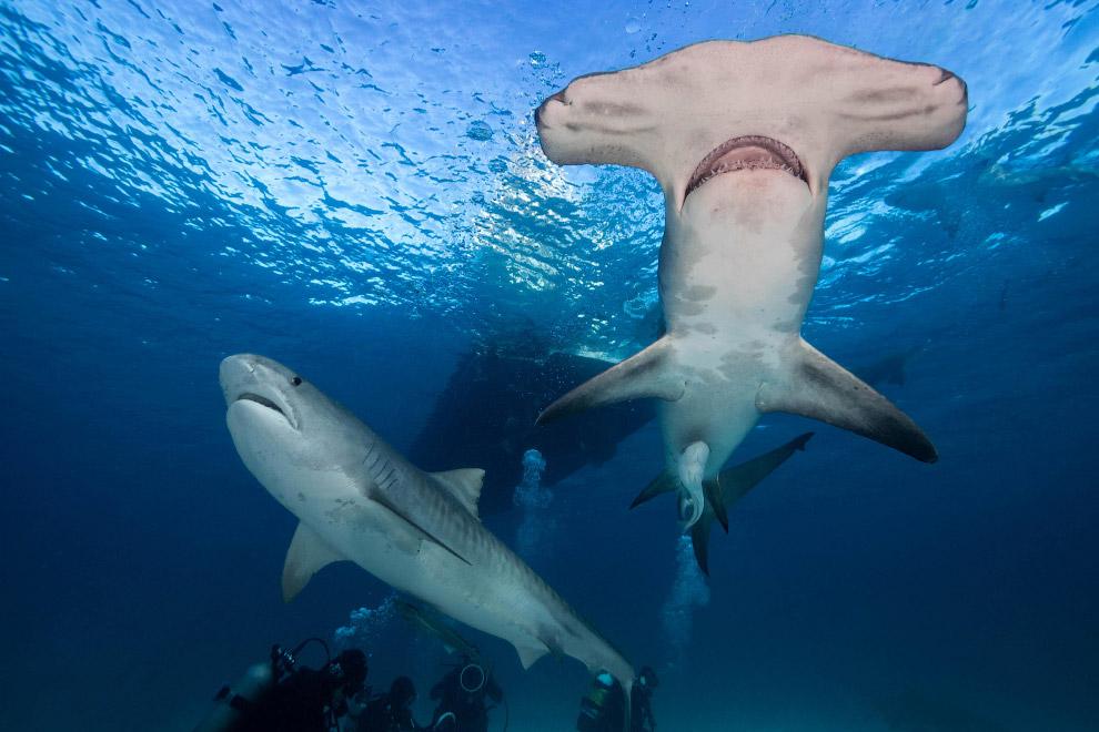 10. Кстати, этот серфер подвергся нападению акул и потерял ногу. Скорее всего, акула приняла ег