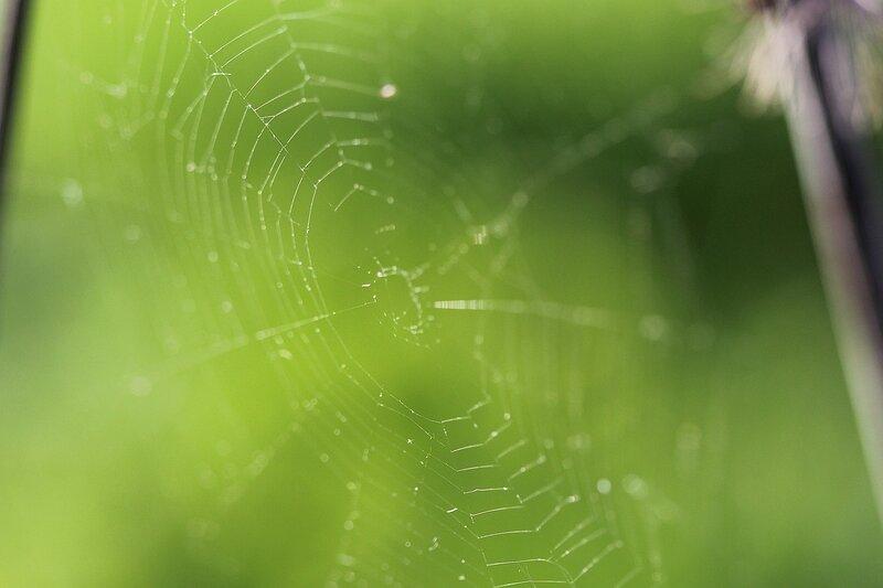 Паутина на зелёном фоне