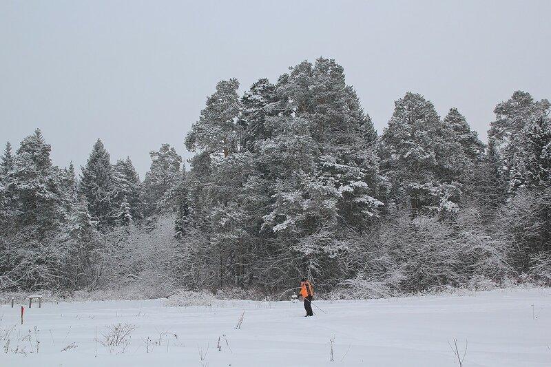 Лыжник и заснеженные сосны в Заречном парке города Кирова